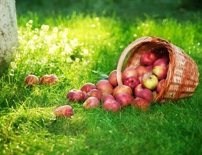 gesundes essen: äpfel