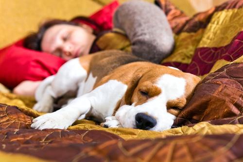 schlafen gesund