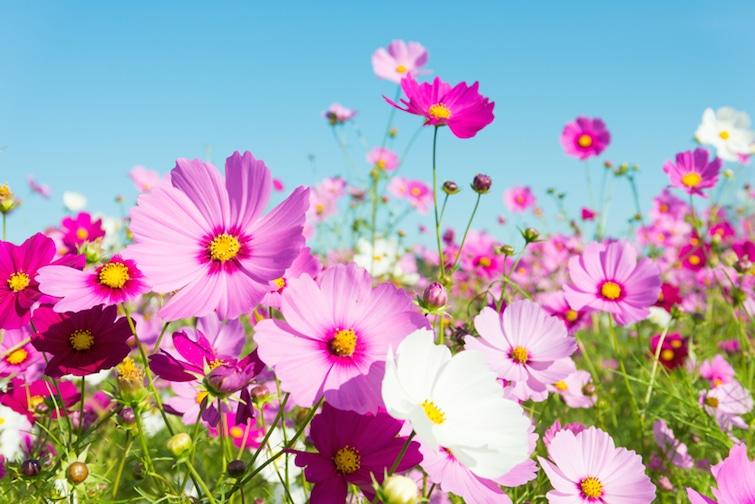 Blumenmeer im Garten | © panthermedia.net /kenjii