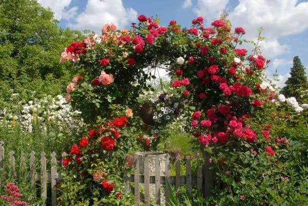garten gestalten rosen